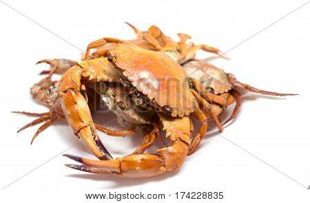 Cooked sea crab on white background. Red crab studio photo for restaurant menu or cooking recipe book. Fresh seafood served for dinner. Healthy eating. Whole red boiled crabs on plate. Seafood cuisine