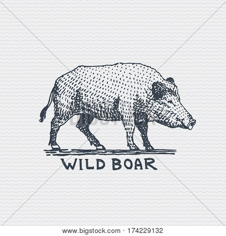 vintage old logo or badge, label engraved and old hand drawn style wild boar, pig .