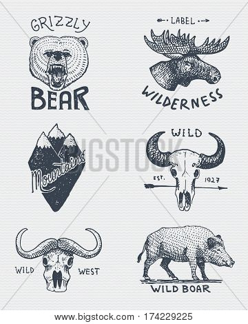 set of engraved vintage, hand drawn, old, labels or badges for camping, hiking, hunting with grizzly bear, moose, mountain peak skull of buffalo and wild pig, boar