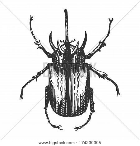 beetle, insect species isolated engraved, hand drawn animal in vintage style old rhino