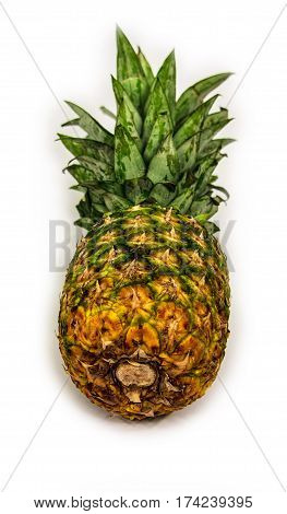 The pineapple is a tropical plant, Raw pineapple isolated on white background, Fresh green pineapple
