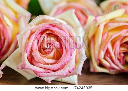 The beautiful Pink roses on wooden background.