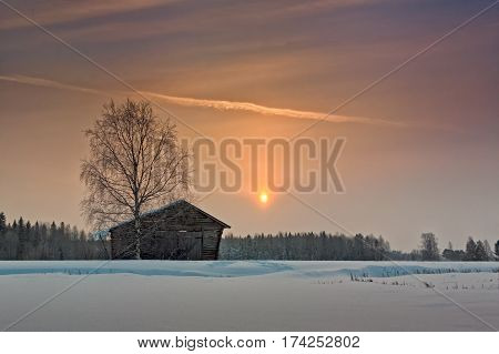 Birch And Barn House Under Winter Sunrise