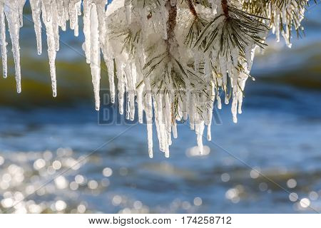 Beautiful patterns of icicles of different shapes and sizes on a branch of pine and glare from the sun on the water