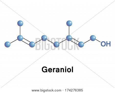 Geraniol is a monoterpenoid and an alcohol. It is the primary part of rose oil, palmarosa oil, and citronella oil. It also occurs in small quantities in geranium, lemon, and many other essential oils