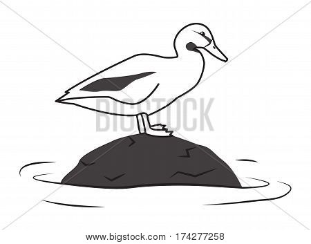 Duck standing on a stone in the water. Simple vector illustration