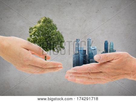 nature, conservation, environment, ecology and people concept - young and senior woman hands holding green oak tree and city buildings over gray concrete background