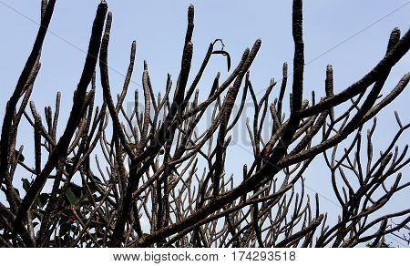 Tree Twigs sky and background wood .