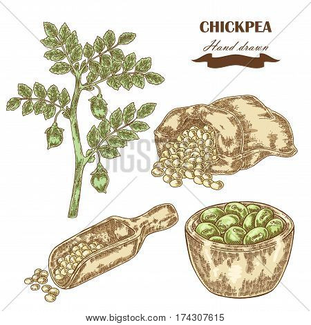 Hand drawn chickpea plant. Wooden scoop sack and plate with pea. Vector illustration