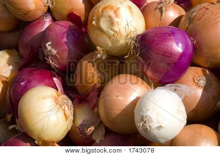 Multi-Colored Onions (1498)