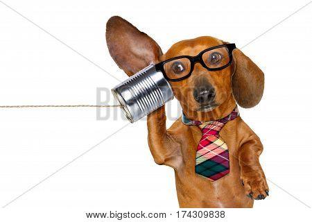 Dog On The Phone Listening Carefully