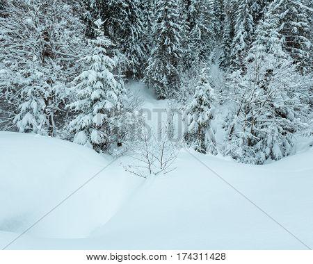 Winter Carpathian Forest.