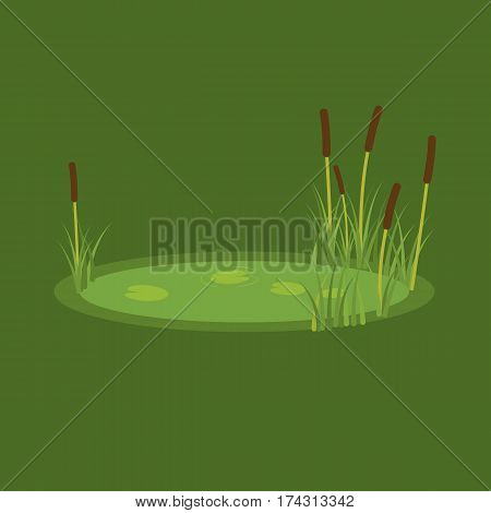 vector illustration of the marsh, reeds and water lilies on a green background.