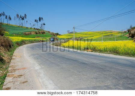 Small blue car driving on a grey asfalt road running through a yellow flower field in the afternoon, China