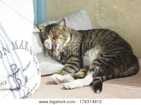 Sleepy cat on a sun, relaxing cat. Cat, resting cat on a sofa in colorful background, cute funny cat close up, big playful cat on a bed, domestic cat, relaxing cat, cat resting, cat