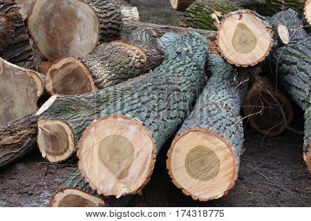 Old rough wood.Wooden background. Tree texture. Tree background. Crack tree. Old tree. Old tree background. deforestation.