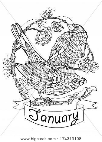 Birds and rowan vector illustration for calendar. January month metaphor