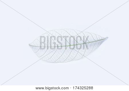 Dry Leaves On White Textures Background.dried Pattern Outdoor Dead Plant Branch Nature.leafs Flora W
