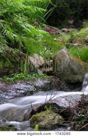 Riverflows113