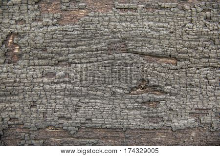 Background. Fire charred wood background. texture ground