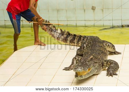 Thailand, zoo Show of crocodiles at Crocodile Farm
