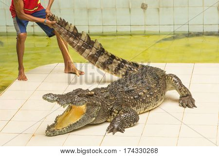 Thailand, zoo Show of crocodiles at Crocodile Farm