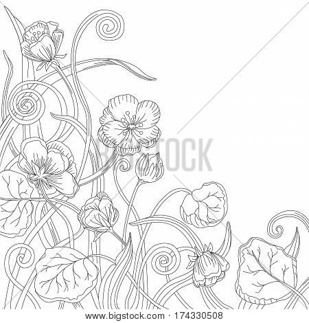 Marsh marigold cowslip king-cup wild herbs vector floral blossom beautiful nature spring forest flower pattern background with blooming plants hand drawn in black outline isolated white background