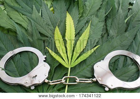 Marijuana leaves and hand cuffs crime or addiction concept