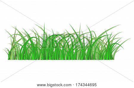 Green Grass Isolated Vector Symbol Icon Design.