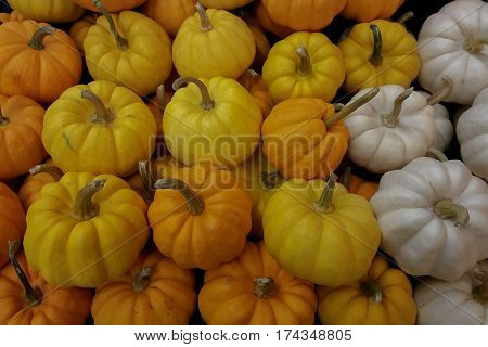 Pumpkin vegetable white yellow color Background Images
