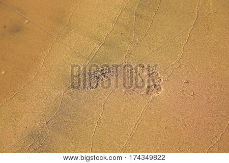 Female Foot Print In Sand