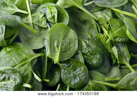 Fresh valerian leaf salad as a background. Healthy eating. Food photography.