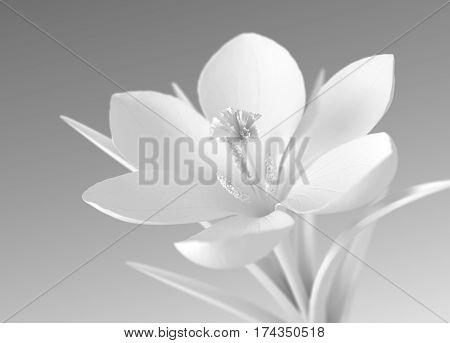 White Flower On Gradient Background. 3D Illustration.