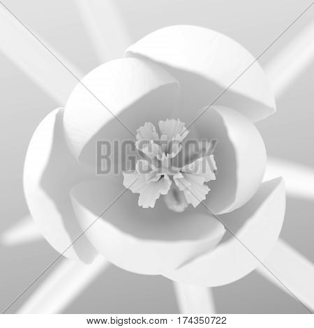 Top View On White Crocus Flower Blooming. 3D Illustration.
