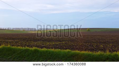 Field with sprouting shoots and forest in the background under a blue sky with clouds