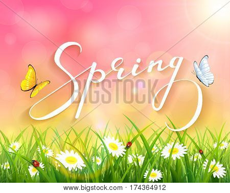 Lettering Spring with pink sunny natural background, butterflies flying above the grass with ladybugs and flowers, illustration.