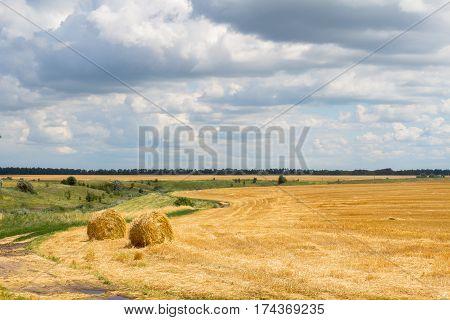 Sheaves of hay in the fields. Cherkassy region. Ukraine