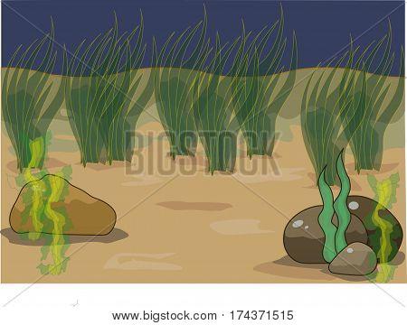 a underwater background, undersea life, a seaweed