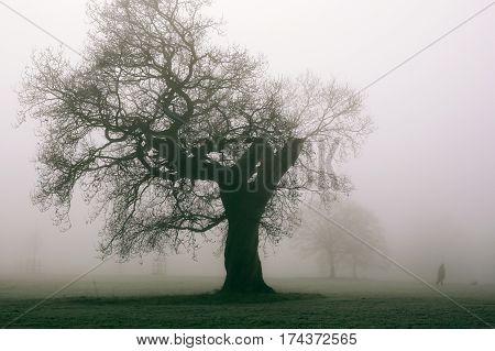 Woman walking her dog in Broomfield Park, London, on a frosty foggy winter morning.