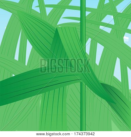 Dense thickets of grass close-up against the sky. Vector illustration