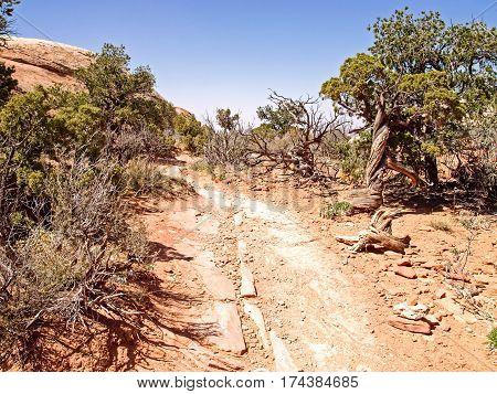 Nature National Park, Utah. The Landscape And Rocks. Roads And Propinki Park, Utah