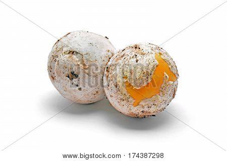 two bulbs of caesar's mushroom amanita caesarea delicious raw food
