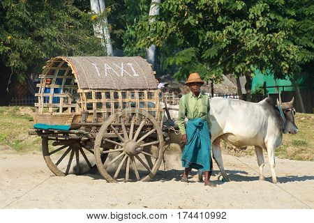MINGUN TOWN, MYANMAR - DECEMBER 21, 2016: The elderly man with the cart drawn by a zebu waits for passengers