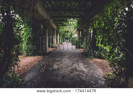 Colonnade walkway with ivy columns and fallen leaves near Centennial Hall and Japanese garden in Wroclaw, Lower Silesia, Poland.