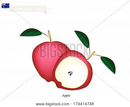 Australia Fruit Illustration of Red Apple. The National Fruit of Australia..