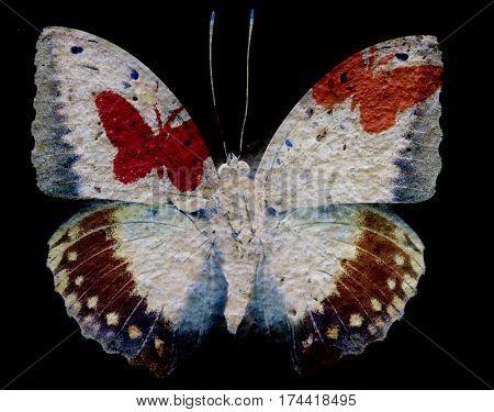 Grunge Butterfly  texture Background