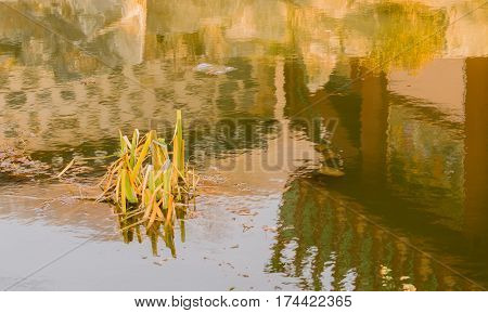 Closeup of a small pond at a Buddhist temple with green plants growing in the middle of the pond and a beautiful reflection of the plants the stones around the pond and of a temple building next to the pond