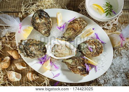 Oysters on crushed ice with antique oyster knife and silver fork with lemon fruit and pearls on a tin plate on a marble slab. Opened Oysters on metal copper plate on dark wooden background.