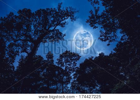Silhouette the branches of trees against blue sky with full moon on tranquil nature. Beautiful landscape with large moon outdoors at nighttime.