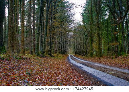 Sunlit path in German forest tract.  Road in forest-gravel road in German green park.